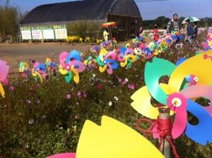 Taichung Flower Show 2012