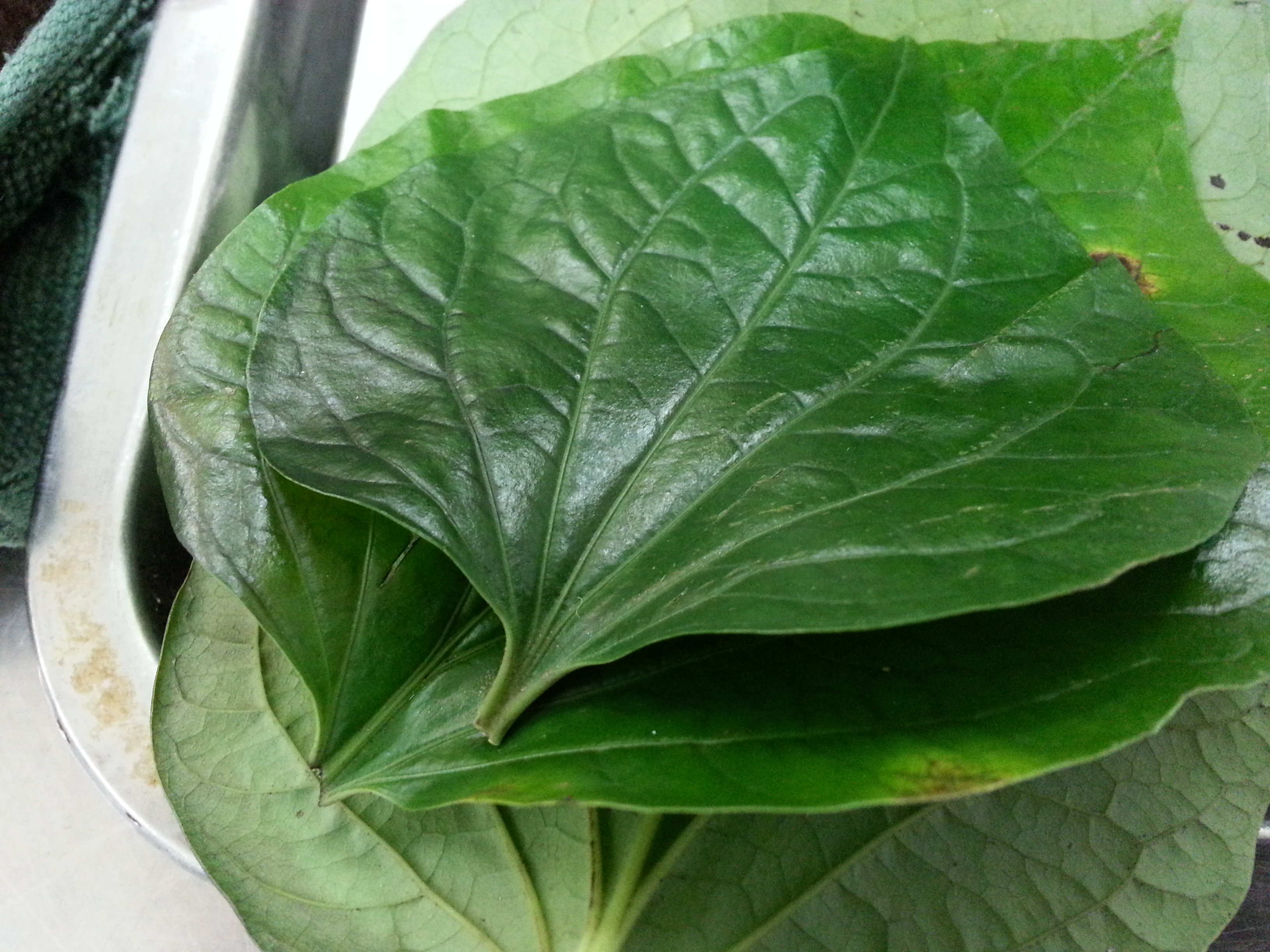 Prawn skewer in wild betel leaf   Pot Gardening