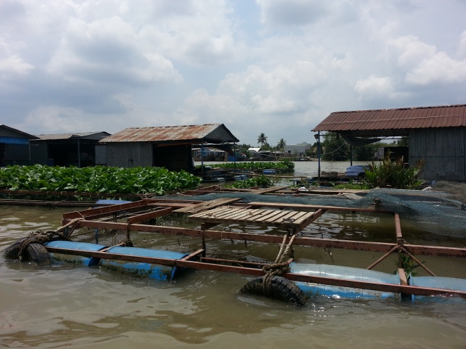 Fish farming in the Mekong Delta