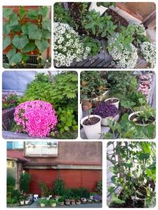 Summer garden outside a home in Otaru