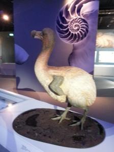 That's how the dodo bird became extinct