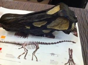 dinosaur bones 29 July 2011