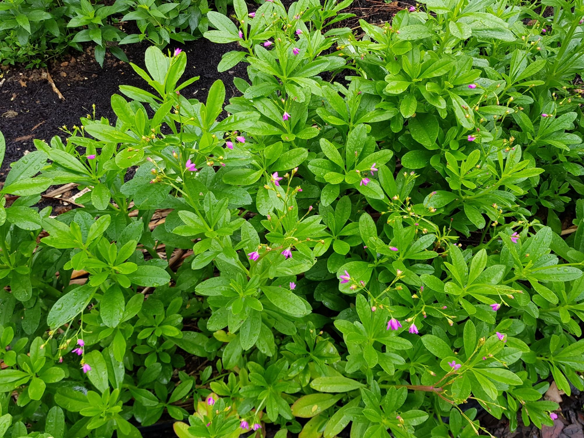 Day At Pasir Panjang Nursery Pot Gardening